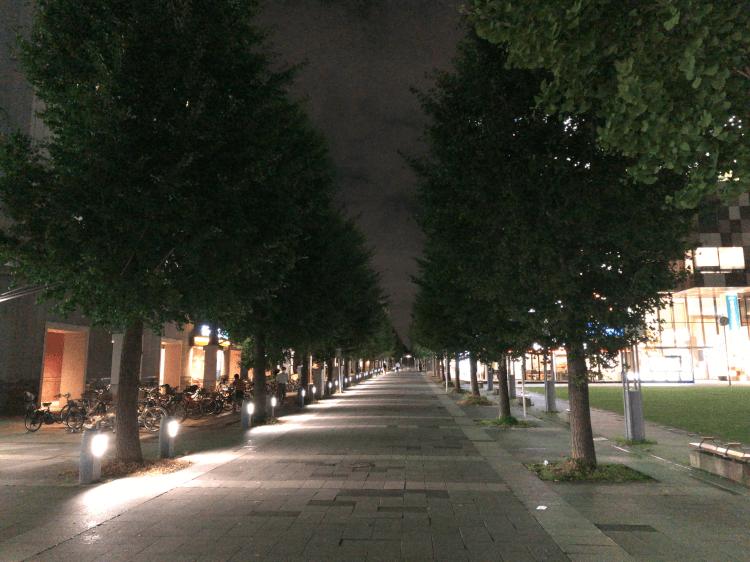 センター北駅前の並木道